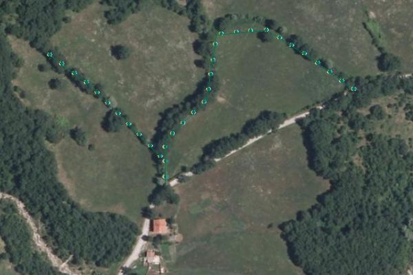DBTR - Filare di alberi - (FIL_GLI)